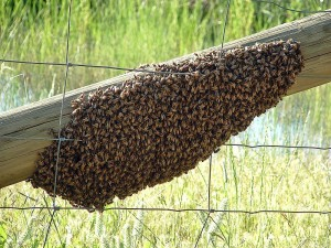 Bee Removal Melbourne | Pest Control Empire
