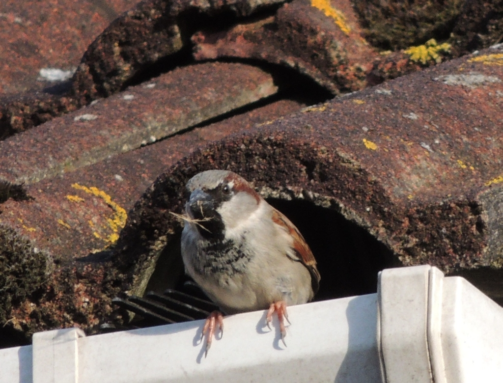 how to bird proof gutters melbourne