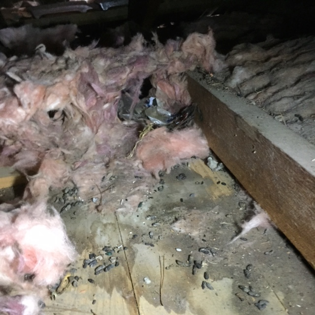 Pest Control Braybrook Rodent Removal Pest Control