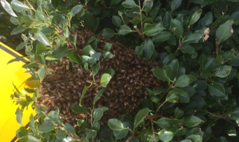 Bee Removal Melbourne