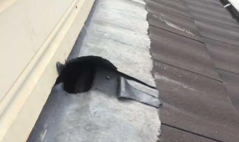 Possums can find many different ways to enter your roof or walls. Here we see a possum gain entry into a roof via moving some lead flashing.